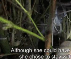 Bezdomny psiak i jego szczeniaki uratowani