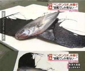 Dziwna ryba złowiona w Japonii