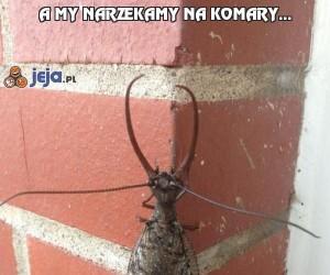 A my narzekamy na komary...