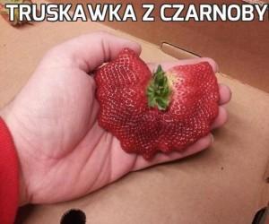 Truskawka z Czarnobyla