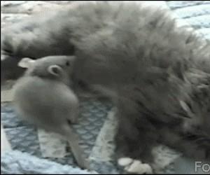 Mysz i kot śpią razem