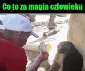 Zaszokowana małpa