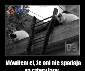 Zakład kotów