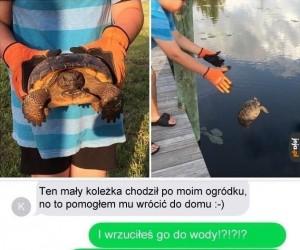 Był żółw, nie ma żółwia