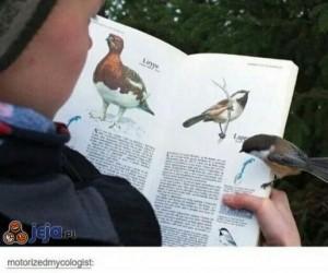 Ptaki potrafią czytać