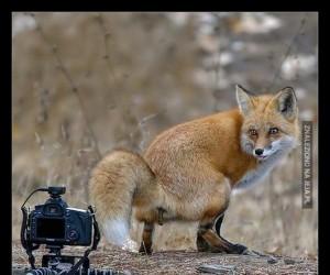Kiedy chcesz zrobić idealne zdjęcie
