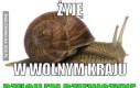 Co tam u ślimaka