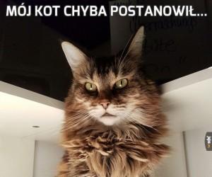 Mój kot chyba postanowił...