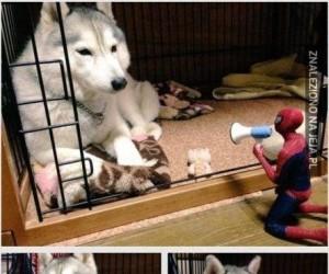 Historia Spidermana i psa