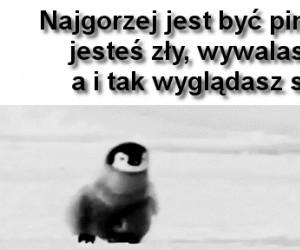 Ciężkie jest życie pingwina