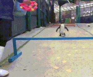 Sprytny pingwin
