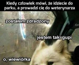 Psie problemy