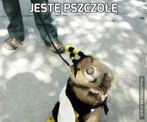 Jestę pszczołę