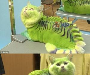 Jak się przyjrzysz, to widać, że to kot
