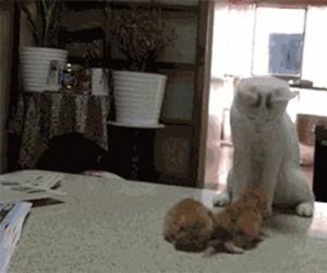 Matka uczy kocięta jak się walczy