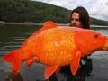 Taka złota rybka, to może dopiero spełniać duże marzenia
