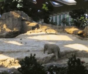 Rodzice słoniątka na ratunek!