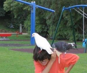 Nie jedz kanapek w parku