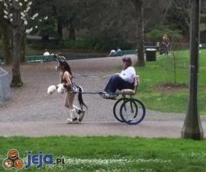 Tymczasem w parku...