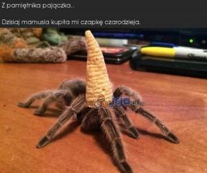 Z pamiętnika pajączka