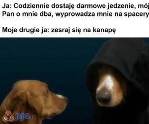 Zła strona psa