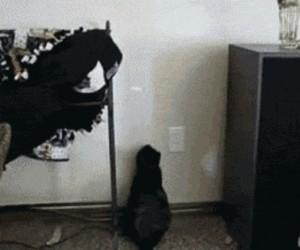 Kot vs czerwona kropka