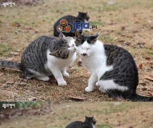 Kotki się miziają