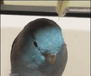 Ptasior z uszami