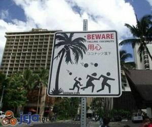 Uwaga na kokosy