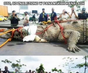 Oto, co znaleziono w Panamskich kanałach