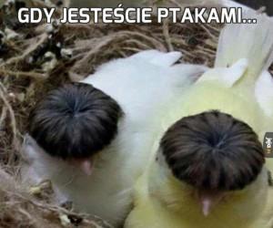 Gdy jesteście ptakami...