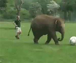 Słoń i piłka