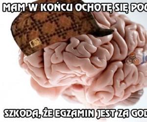 Mój mózg to dupek