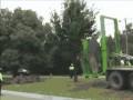 Wymiana drzewa