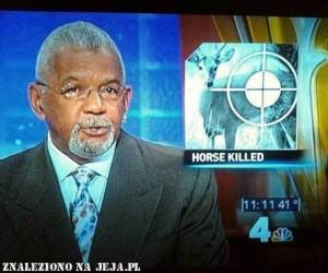Zabito konia