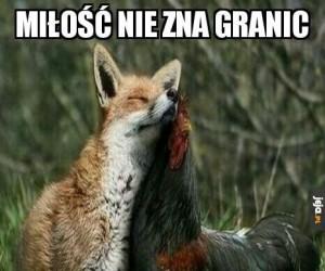 W miłości nie ma podziału na gatunki