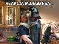 Reakcja mojego psa...