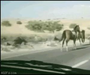 Zderzenie czołowe z koniem