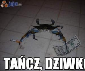 Krab zgrywa szefa