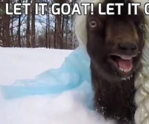 Let it goat! Let it gooooat!