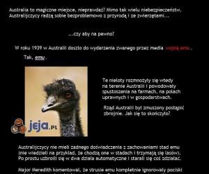 Wojna Emu, czyli jak Australia przegrała z bandą nielotów