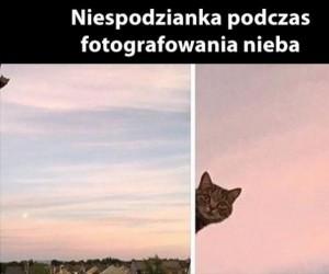 Foto bomba