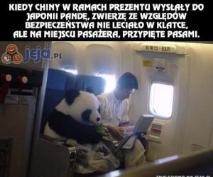 Panda na specjalnych prawach
