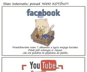 Koty opanowały już Internet