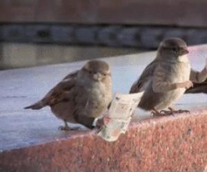 Ptaki z rękami