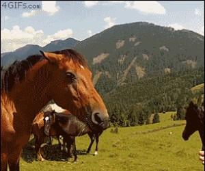 Nie karmić zwierząt!