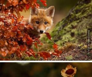 Zwierzaki jesienią
