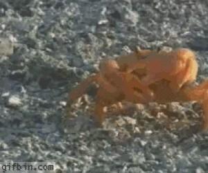 Kraby to niezłe badassy