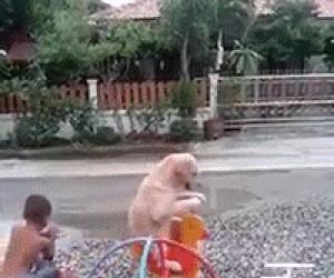 Pies na karuzeli
