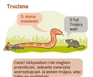O, gadający wąż!